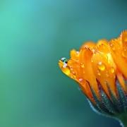 Oranje vibrators 5 lekkere koningsdag traktaties