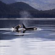 Menopauze - De vrouw, de orka & presidenten